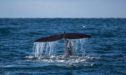 Whale watching tours